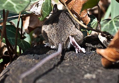 Besuch der Maus