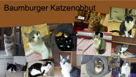 Katzenobhut