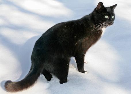 Moritz-im-Schnee