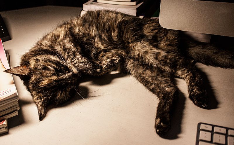 meine Katze Lili