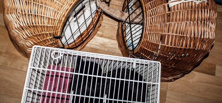 Die komplette Katzenbande beim Tierarzt