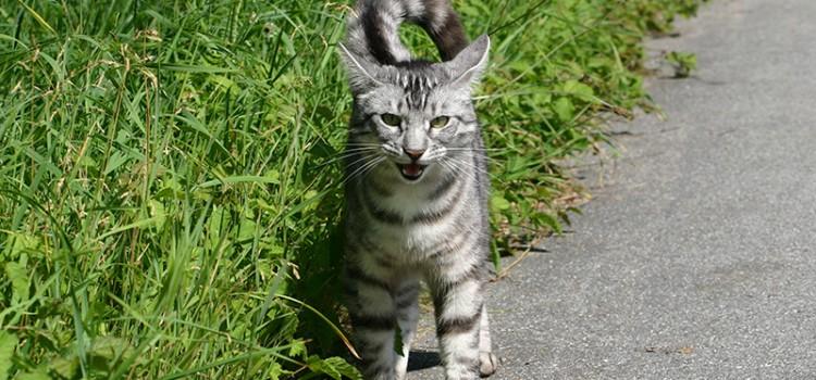 Elke kümmert sich um Straßenkatzen