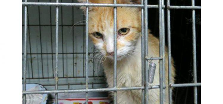 Spendenaktion für Tiere in Spanien