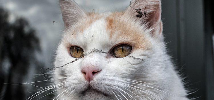 Katze mit Naturschmuck