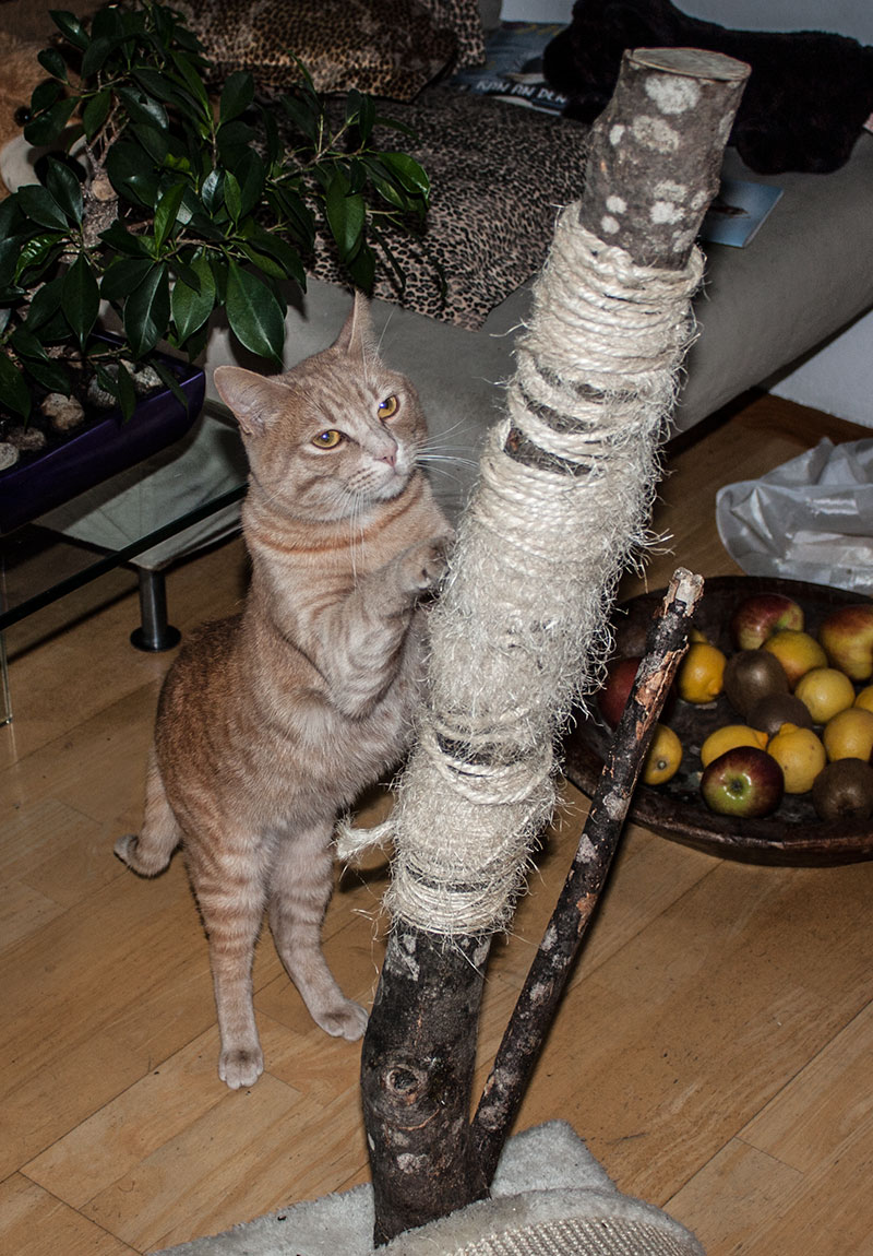 kratzbaum-wohnung