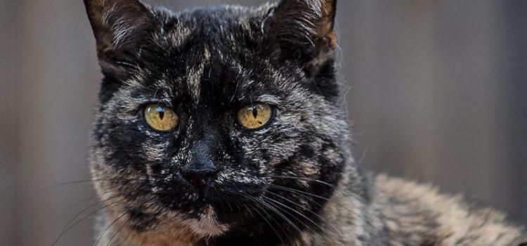Lucy, die Nachbarkatze