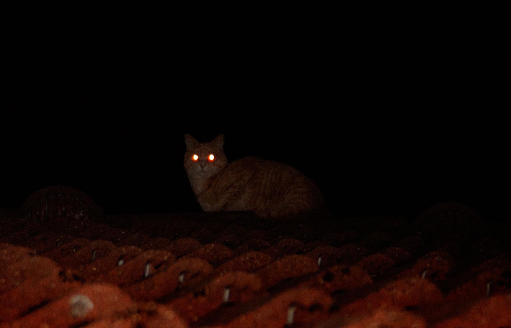 kater-in-der-nacht