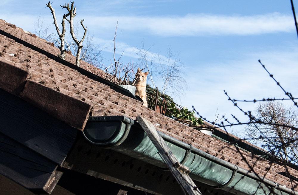 Rosso auf dem Dach