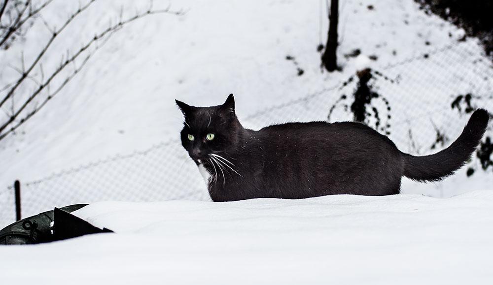 Katzen-winter