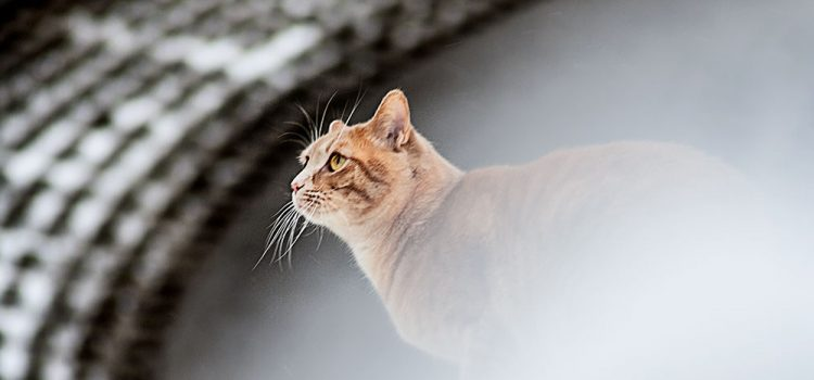 Rosso auf dem Schneedach