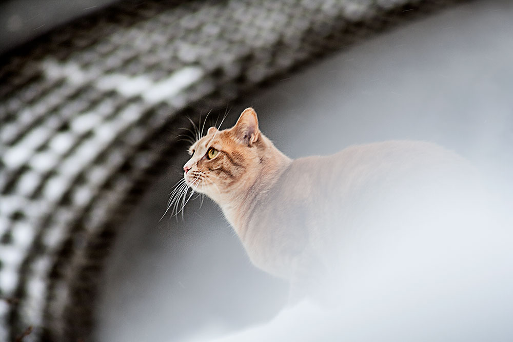 roter kater im schnee