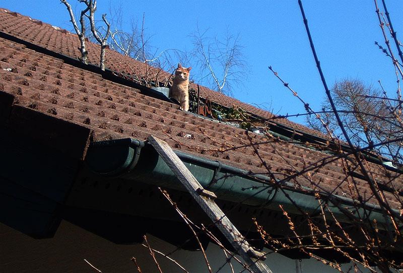 dachkater