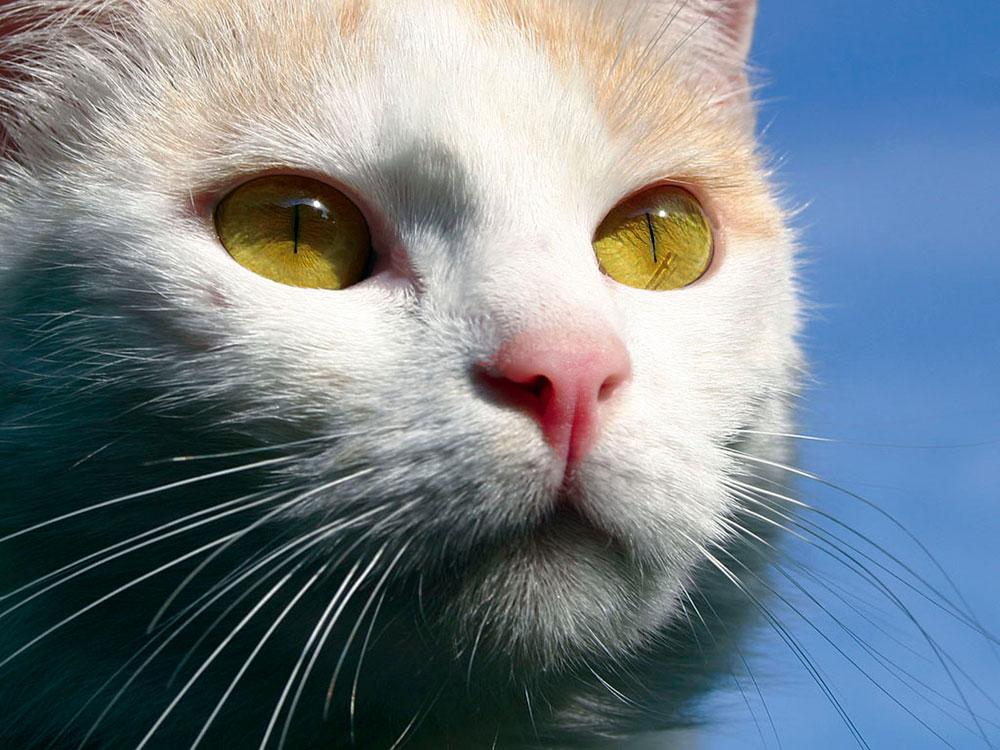 Katze Lieschen