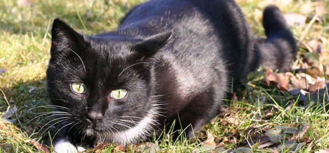 Das Aroma der Katzen