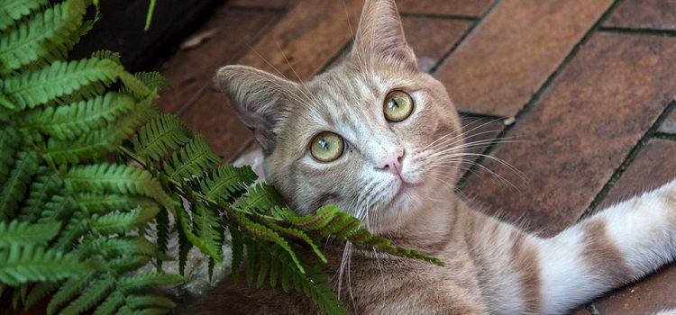 Farn … giftig für Katzen!