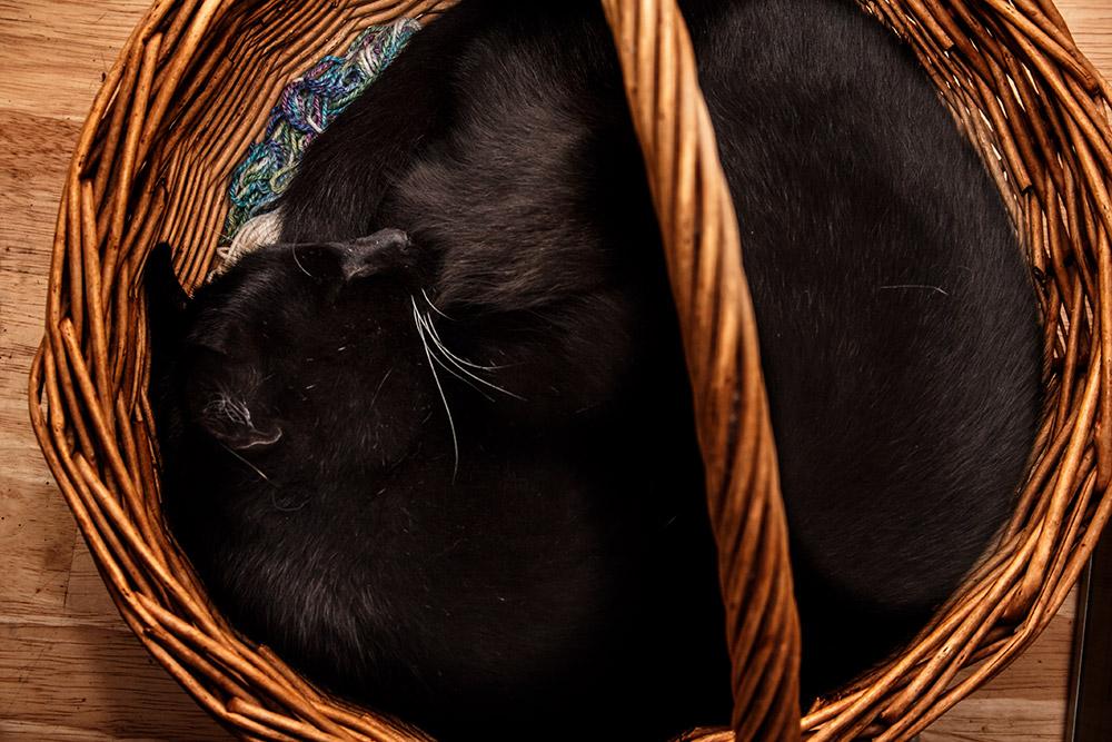 schwarzer kater in korb
