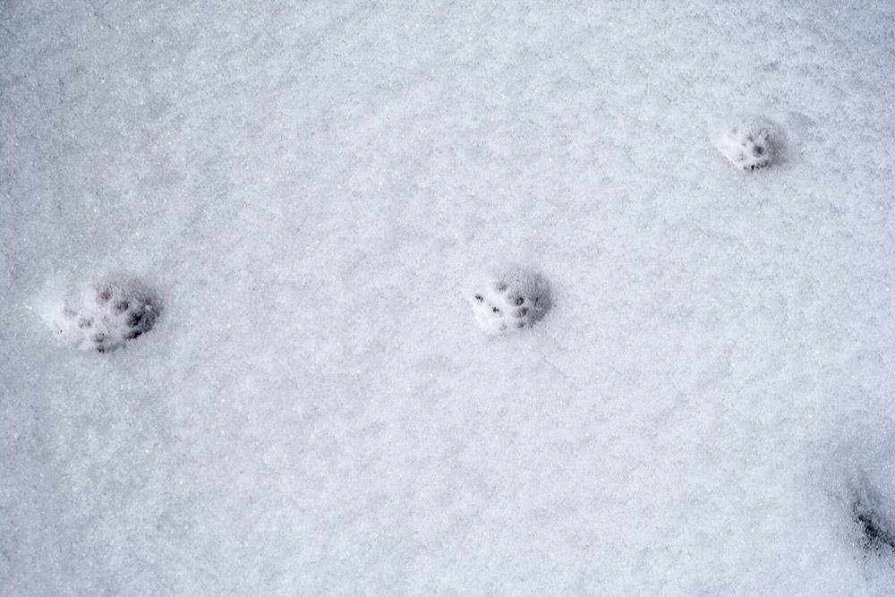 katze-im-winter