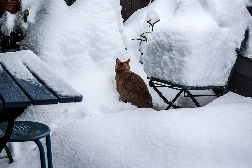 kater-im-schnee