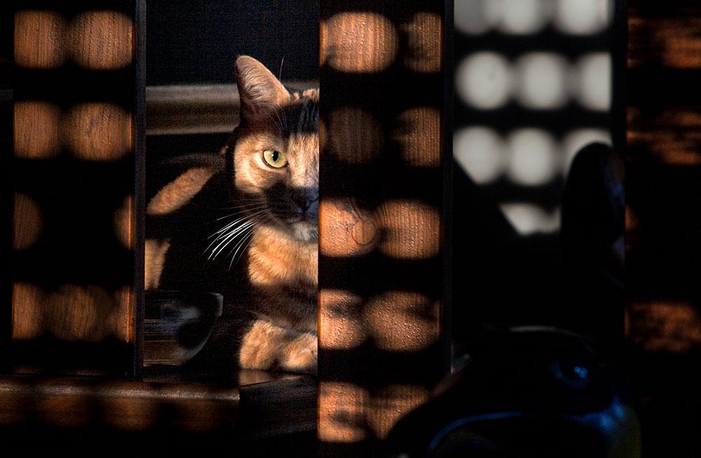 rote Katze im Licht